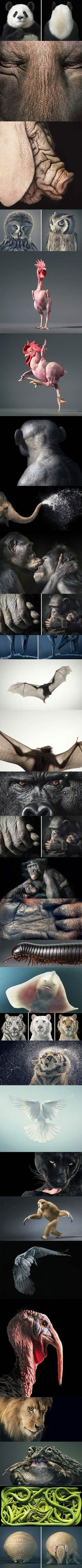 Animal portraits.
