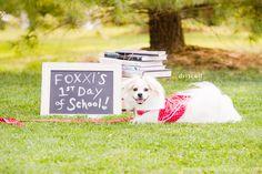 Foxxi the Dog's First Day of School School Supplies List Elementary, Diy School Supplies, 1st Day Of School, Nursing Tips, Nyc Wedding Photographer, School Photos, Photographing Babies, Animal Photography, Portrait Photographers