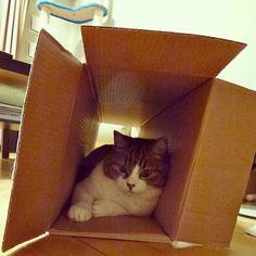 mii #cat