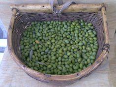 Olive in salamoia  La mia personale ricetta delle olive in salamoia.  Per la buona riuscita di questa ricetta, per prima cosa, selezionare olive ancora verdi e sode.