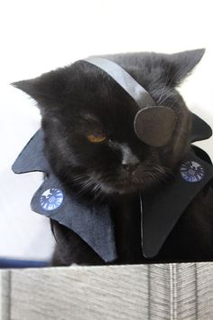 LOVE: Nick Fury cat cosplay brought to you by @migraineSky: http://j.mp/16cGJ3g