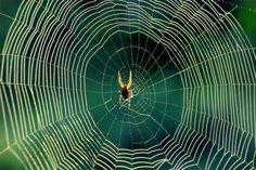 Tem medo de aranhas? | Portal Elvasnews