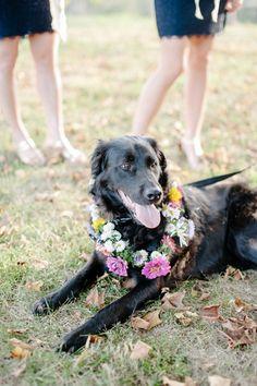dog floral collar | Sera Petras #wedding