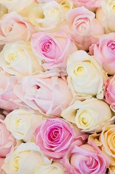 Love this beautiful blend of pink and white roses.