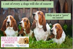 This post details organizations that will help pay for cancer treatment for dogs. Great resource for those who want to use that option but need financial help.