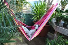 Nigel is hammocking it for the day :)