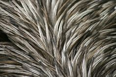 WONDERFUL TEXTURES FEATHERS Tile Projects, Feathers, Texture, Plants, Surface Finish, Feather, Planters, Furs, Plant