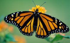 monarcas salvadas de huracan