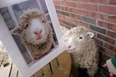 Home - Sweet Pea & Friends Lambs, Bath Bombs, Adorable Animals, Soaps, Make Me Smile, Awesome, Amazing, Sheep, Sweet Home