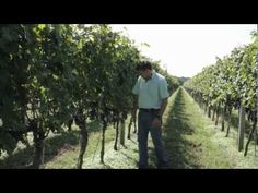 True to Our Roots Video Series: Video #2 Featuring Chatham Vineyards