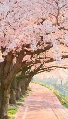 * Pink Canopy of Flowers