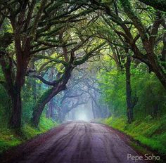 Nice drive down a misty and magical road in South Carolina. Photography by soho Scenic Photography, Nature Photography, Beautiful World, Beautiful Places, Beautiful Pictures, Soho, Fantasy Landscape, Land Scape, The Great Outdoors