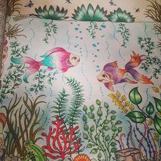 #jardimsecretoinspire #colorindolivrostop