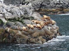 kenai_fjords_national_park_alaska
