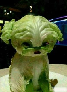 Funny dog made of lettuce art xoxo  xD