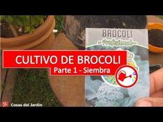 El Brocoli es un cultivo para sembrar a mediados del verano y para cosechar a fines del invierno