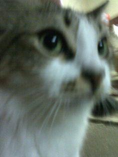 ● Linda :), # gato # cat ♥