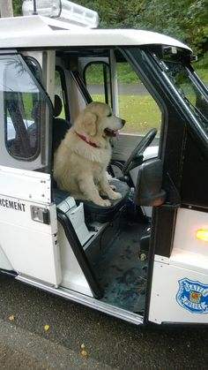 A Big Wet Dog Takes Over a Parking Enforcement Scooter During a Seattle Storm
