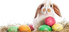 Ci siamo...  il giorno di Pasqua avanza, approfitto di questo programma per augurare a tutti con un unico messaggio il mio augurio che sia più serena della scorsa...