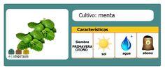 llena tu huerto en casa con menta fresca:  http://ecohortum.com/como-cultivar-menta/