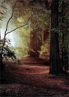 Clarté dans la Forêt -