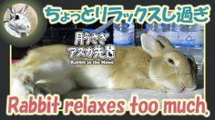 ちょっとリラックスし過ぎ【ウサギのだいだい 】 2016年9月15日