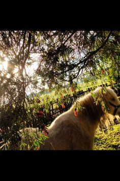 Farm garden at sunrise. (Captured on iPhone)