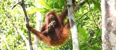 Palm Oil Free Product List