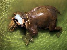 bathing-elephant-Brilliant-photography-from-Natgeo-archives