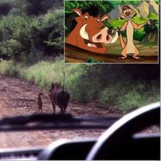 This is soo funny #lionking