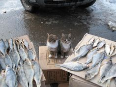 1000x750, 126 Kb / коробка, коты, рыба