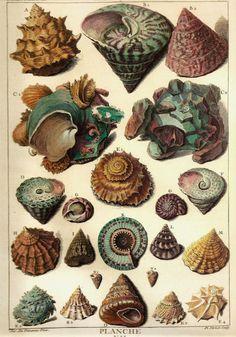 shell illust - Google 검색