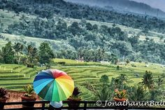 Jatiluwih Bali Indonesia  For the book Secrets of Bali Fresh Light on the Morning of the World - go to http://ift.tt/2oNwySP  For the book Murnis Bali Tours Where to go What to do and How to do it - go to http://ift.tt/2oRi9EL  #aroundtheworld #worldtraveler #jonathaninbali #www.murnis.com #travelphotography #traveler #lonelyplanet #travel #travelingram #travels #travelling #traveling #instatravel #asian #travelphoto#exploringtheglobe #jatiluwih #mytinyatlas #planetdiscovery #roamtheplanet…