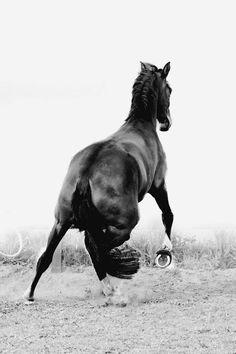 www.lacavalieremasquee.com | Horse