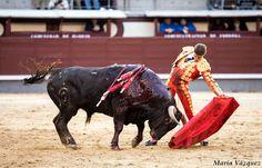 FOTOS DEL TRIUNFO DE DIEGO CARRETERO ANTE UNA BUENA NOVILLADA DE FUENTE YMBRO  Diego Carretero Las Ventas Madrid Noticias Toros Toreros de Albacete