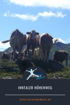 """Inntaler Höhenweg met de """"Seven Tuxer Summits"""" Horses, Animals, Alps, Animales, Animaux, Animal, Animais, Horse"""