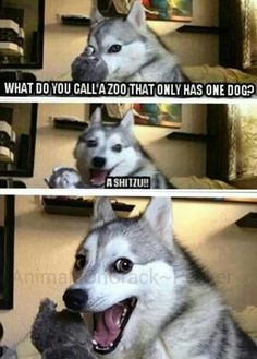 Some types of zoo's Some types of zoos – Funny Husky Meme – Funny Husky Quote – Some types of zoo's The post Some types of zoos appeared first on Gag Dad. Husky Jokes, Funny Husky Meme, Funny Dog Jokes, Puns Jokes, Corny Jokes, Funny Animal Quotes, Funny Animal Pictures, Stupid Funny Memes, Funny Relatable Memes