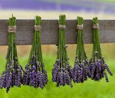 11 způsobů, jak z domu vyhnat rakovinu Outdoor Garden Decor, Nordic Interior, Medicinal Herbs, Herb Garden, Plant Hanger, Asparagus, Diy And Crafts, Health Fitness, Food And Drink