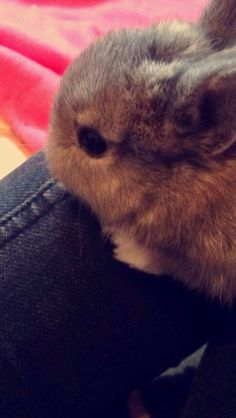 VANTE!❤️❤️ Your My Favorit little rabbit!❤️❤️ I Love You!❤️❤️