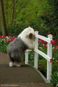 Petit chien au poils longs!!!