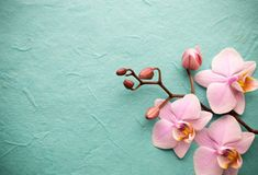 Pink Orchid on a Background