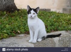 Cat Reference, Animal House, Black And White, Pets, Animals, Color, Animales, Pet Store, Black N White