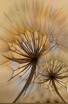 Color Effect, Colour, Surrealism Painting, Closer To Nature, Dandelions, Artistic Photography, Aesthetic Art, Dried Flowers, Art Pictures