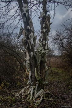 I found a strange totem of animal skulls in the woods Poland x - Abandoned Architecture - Big City Buildings - Modern and Historical Buildings - City Planning - Travel Photography Destinations - Amazing Ugly and Beautiful Places Nature Aesthetic, Aesthetic Images, Ac New Leaf, Horror, Dark Photography, Travel Photography, Southern Gothic, Grunge, Animal Skulls