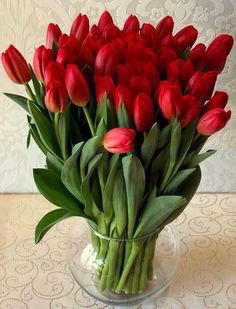 New Flowers Red Tulips Ideas
