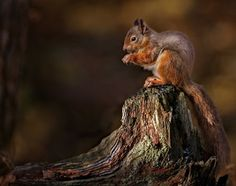 Cosy Snack Time.... by Paul Keates