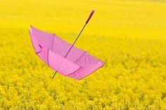 Pink umbrella aloft over field of yellow flowers ~ Airborne | by Håkan Dahlström