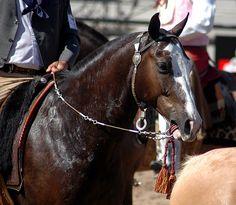 war bridle by Martina V., via Flickr