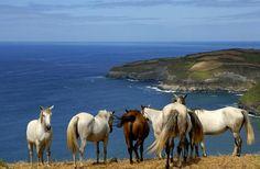 Visit Azores #Islands, Portugal - TripBucket