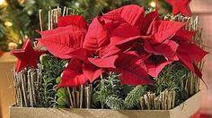 Bildergebnis für florale arrangements advent und weihnachten amaryllis